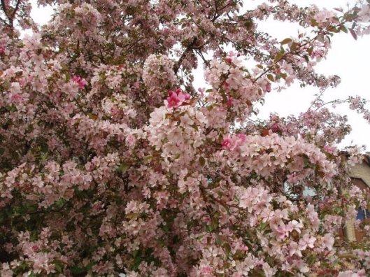printemps 2006 017